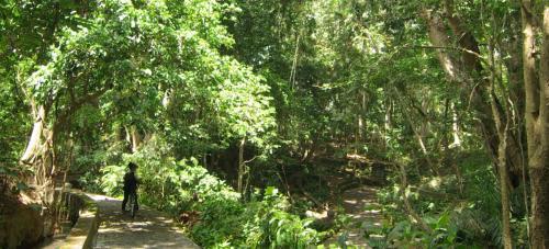フロントには、レンタサイクルが待機。<br />カッコいい、マウンテンバイク。 <br />ではさあ、出発です。<br /><br />ホテルを出てすぐ、<br />早速、熱帯雨林のジャングルを行く。