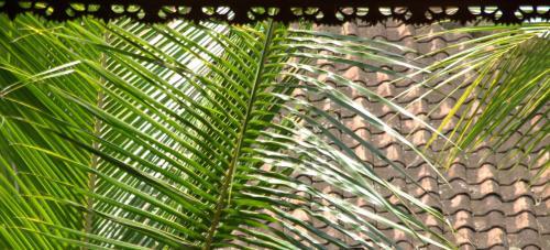 ヤシの葉と藁屋根のコントラスト