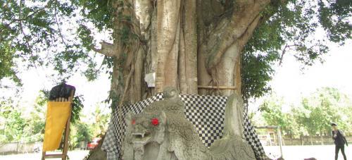 寺院前には、立派なご神木。