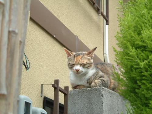 温泉街にはネコがよく似合う。<br />ちなみに、ネコって自分の方が高い位置にいると、近づいても逃げないんですよね。
