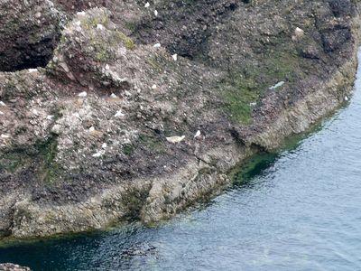 崖に小さく写っている白っぽい影・・・アザラシの赤ちゃんです
