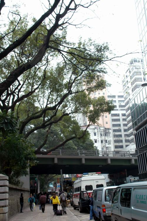 海防道は九龍公園の南面を通っている道。<br />公園から迫り出した楊樹が貫禄在りですね。