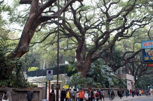 九龍公園南口。