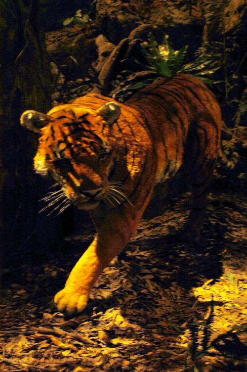 と思ったら、虎が居ました!<br />剥製ではなく、模造品です。<br />目が離れていて間抜け面でした。(^ _ ^
