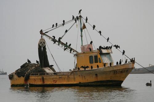 08:00、白人の団体といっしょの船でパラカス諸島へ出発。港を出て数分で鳥にハイジャックされた船を発見(笑)<br /> 今日は天気が悪く、冷たく強い風が吹き付ける。防寒具を持って来てよかった。<br />