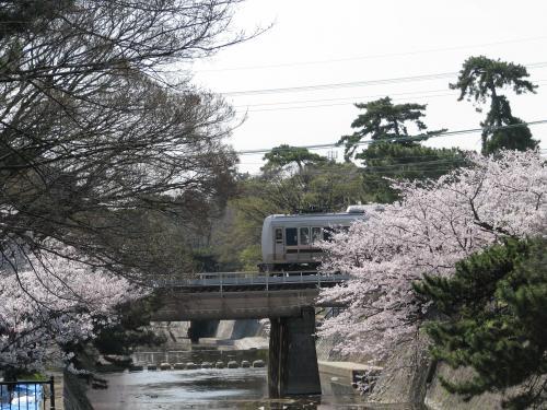 草津からの新快速を尼崎で乗換えて、「さくら夙川」駅で降ります。<br />西宮でも有数な桜の名所でもあるので、駅前には、お花見用の弁当なんかも売っていて、多くの人でにぎわっていました。<br />上手く、東海道線の列車と写真を撮ろうとするのですが、上手くタイミングが合いません
