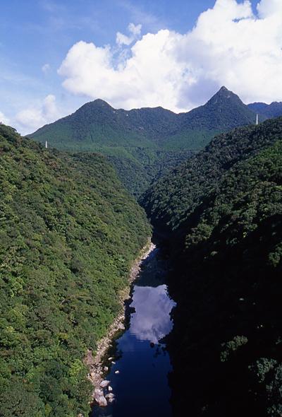 安房川。ブロッコリーみたいな針葉樹に囲まれています。<br />屋久島と言ったら杉が有名ですが、むしろ針葉樹の方が多いのだそうです。