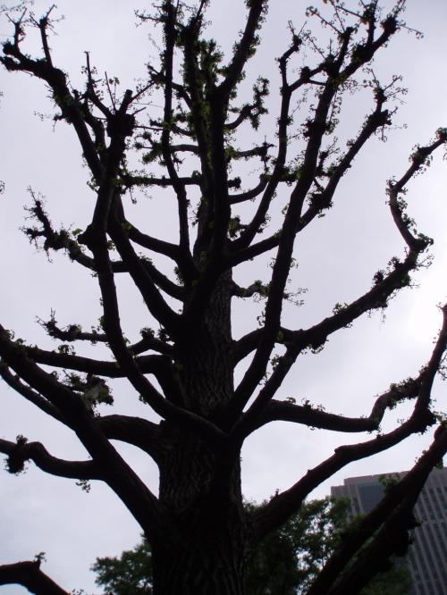 木にはっぱが生えてた