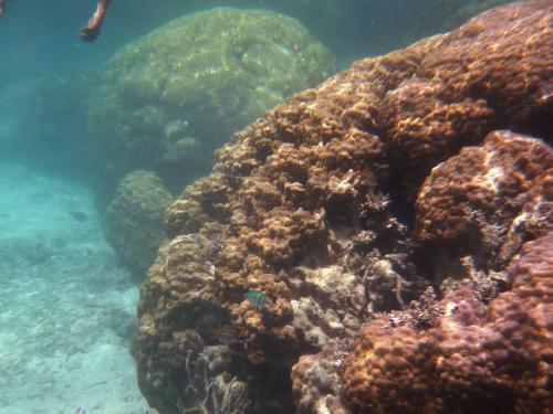 水がとにかく透明!<br /><br />ガイドさん曰く<br />「大きな岩のようなサンゴ、浜サンゴと言いますが、これの上には乗っても大丈夫です。疲れたら乗って下さい。でも、ほかの枝状のサンゴは駄目です。」<br /><br />へー。<br />乗っても大丈夫なんだ〜。<br />と、ちょっと安心。<br /><br />2mくらいの浜サンゴがたくさん。<br />すごいなあー!