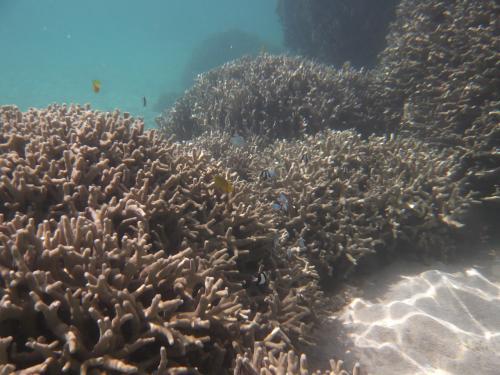 海の中の地形って面白い。<br /><br />泳ぐのは大変だけど・・。<br /><br />2回目のポイントではだいぶ慣れたので、余裕が持てました。