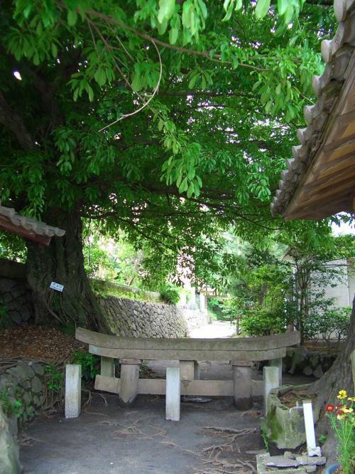 桜島大噴火の時に埋まった鳥居。
