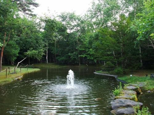 中庭の池にある噴水。暑い夏の昼下がりでもここに来るとひんやりする。