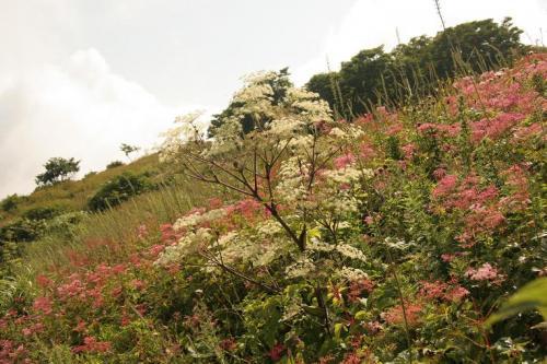 登山道で見られる花