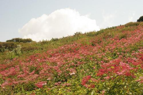 山頂近くのお花畑