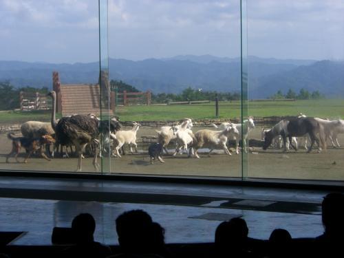 犬と羊とダチョウと馬とアルパカが。。。<br /><br />あぁチャンポンだ!