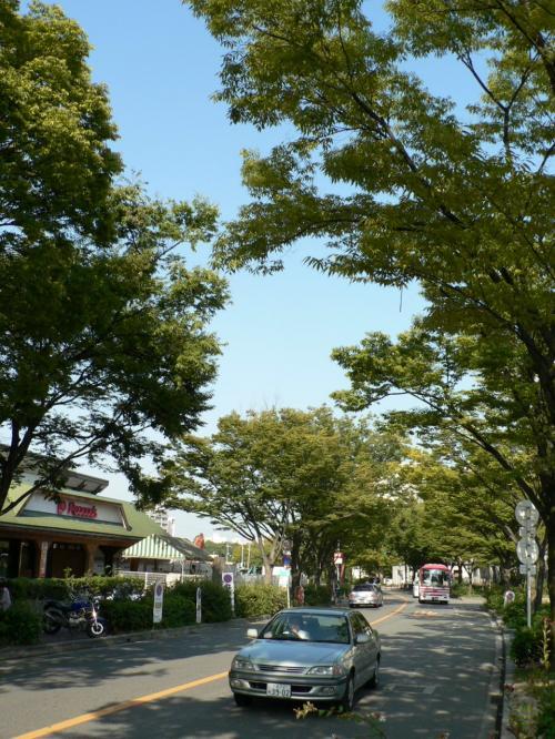 枚方八景のひとつになっている「香里団地の並木」。香里団地全体が旧陸軍香里製造所だった。<br />