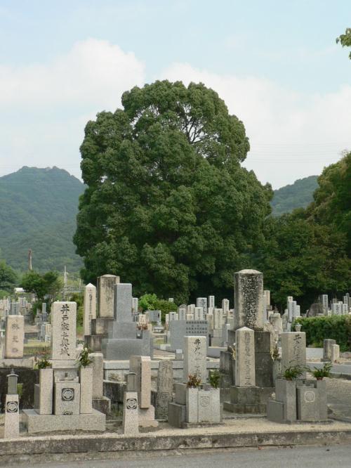 交野市私部墓地(かたのしきさべぼち)。後方の大きな楠の下に野上房雄君(ふうちゃん)たちの墓がある。<br />