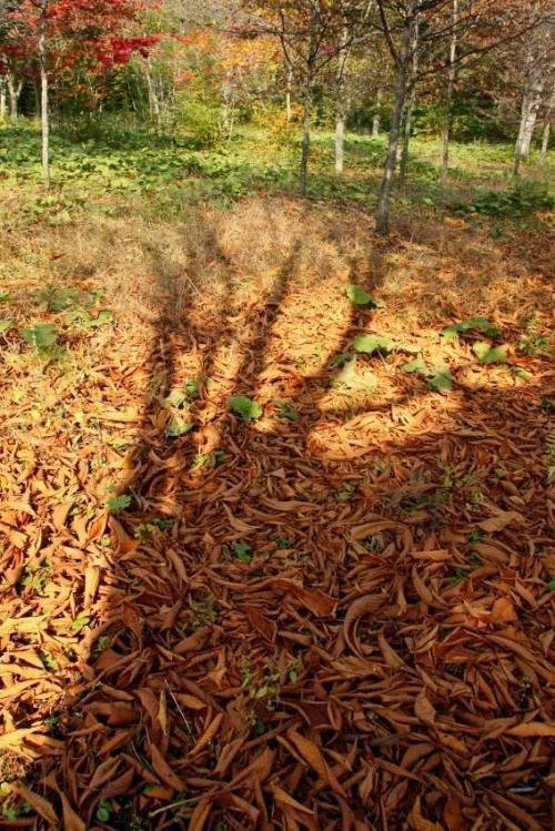 秘密の場所。歩くと落ち葉のサクサクという音が心地よいです。