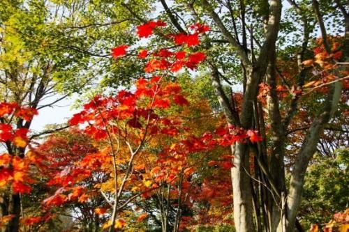 緑、赤、オレンジ、黄色。<br />折り重なるように混じり合った紅葉が賑やかです。