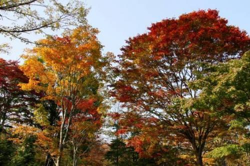 風が吹くと落ち葉のシャワー。これもまたよし。<br />枯れゆく姿に空が透けて、これもまたよし。