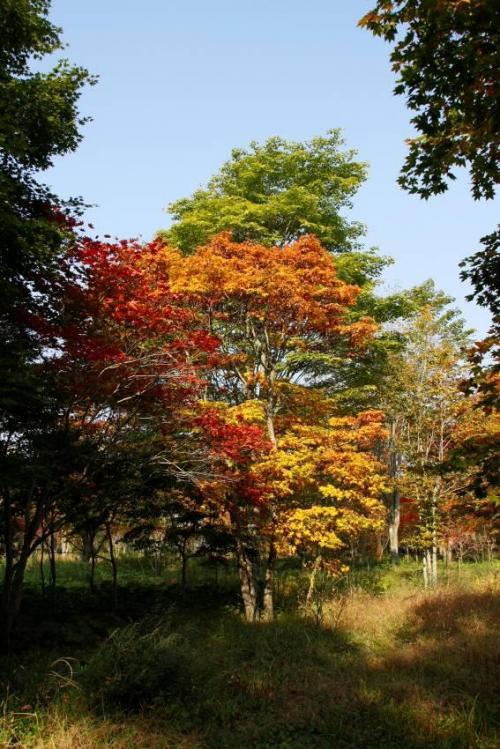 隣り合った木々の紅葉。それぞれの色が違っていて目を奪われます。