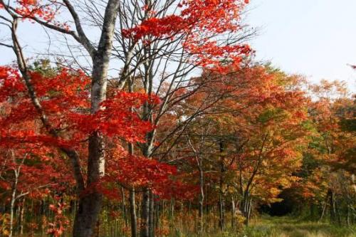 歩いても歩いても続く紅葉の林。<br />どこを撮っても美しくてシャッターを切らずにはいられません。
