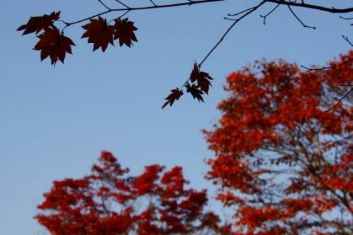 もしも今、風が吹いてしまったら・・・そんな儚げな葉っぱが哀愁を漂わせています。