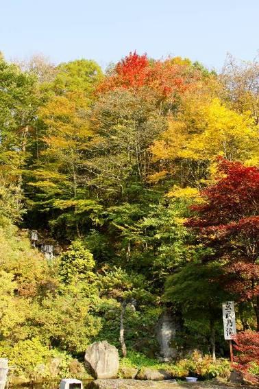 「玄武の滝」。隣り合った木の色づきがそれぞれ違っていてお見事でした。