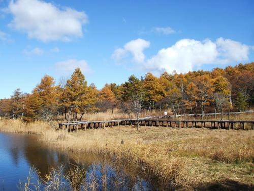 湿地帯の周囲に木製の遊歩道(写真)が作られており植物観察によい。