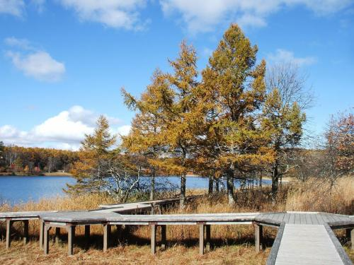 カラマツの黄葉と女神湖(写真)。誰もいない遊歩道をのんびり歩く。風が冷たいので防寒具は必携。