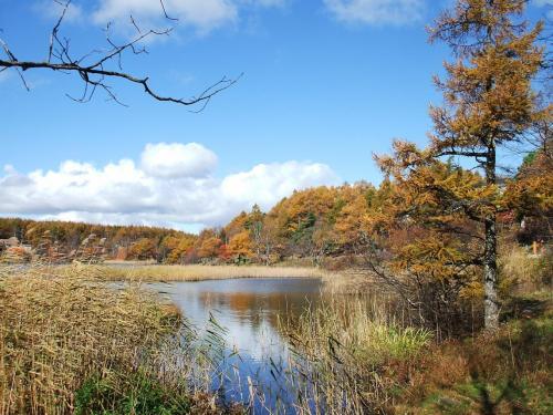 湿地帯に付けられた木の遊歩道を過ぎると湖岸の小道になる。ホテル前の道路に出るまでは自然の土の道である。