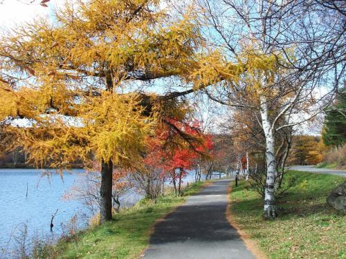広い車道の横に幅1m程の散歩道(写真)がある。私はいつもここを散歩したり、ジョギングしたりする。