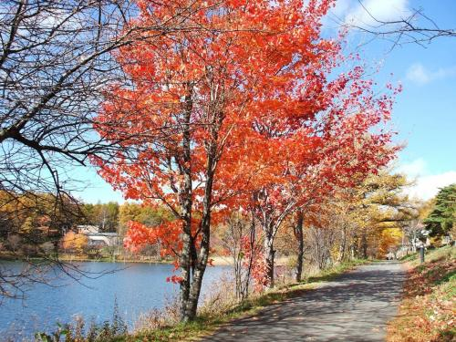 今は紅葉の終わり頃。鮮やかな色の葉っぱも風に吹かれて散っていく。