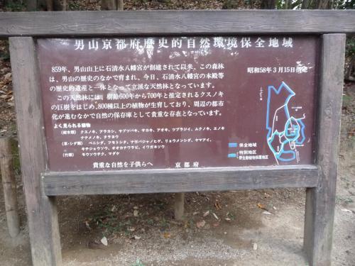 男山は低い山ですが、石清水八幡宮のご神体の山ということもあって、自然が守られているようです。