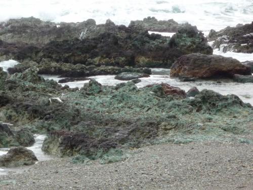 能登の翡翠(ひすい)海岸・・<br /><br />ひすいは色だけですよ 原石は糸魚川の方にあります<br /><br />お昼には少し時間があります<br /><br /><br />ドライブ♪<br />外浦の海岸線を北上します<br />「ゴジラ岩」も発見!<br /><br />