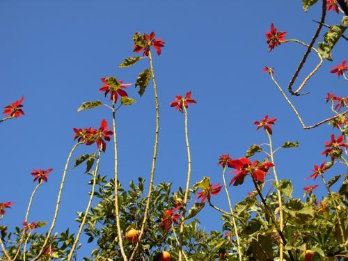 真っ青な 空に<br />小さな 赤い! ハイビスカスの 花。<br /><br />コレからの 10日間の 旅!が<br />楽しいもので・・・ ありますように。。。