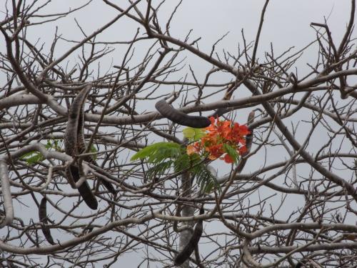 なんていう木だろう。<br /><br />ここだけ花が咲いてる。