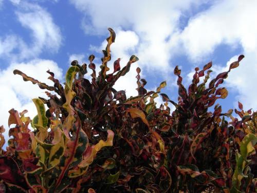 葉っぱ一枚一枚がぐるぐるにねじれて生えてるの。<br />色もぐるぐるにカラフルだし。<br />初めて見たこんな植物。