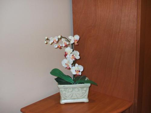 客室のドアを開けるとランの花(写真)が出迎えてくれた。なかなか粋な計らいである。
