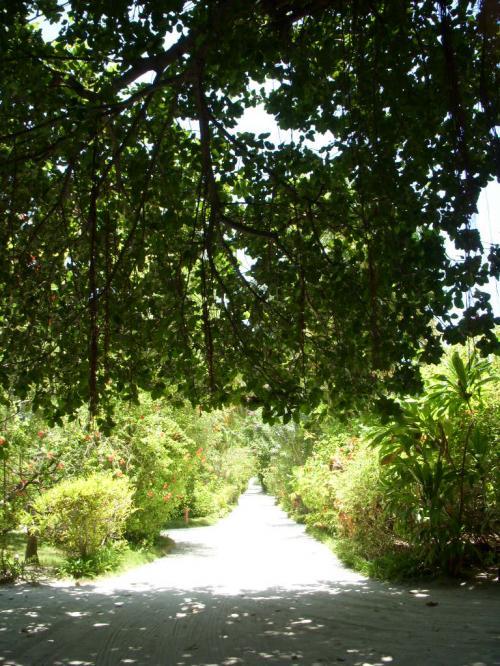 島の中はこんな感じでたくさんお木々が生えています。リゾートとしての歴史の長さを感じさせますね!