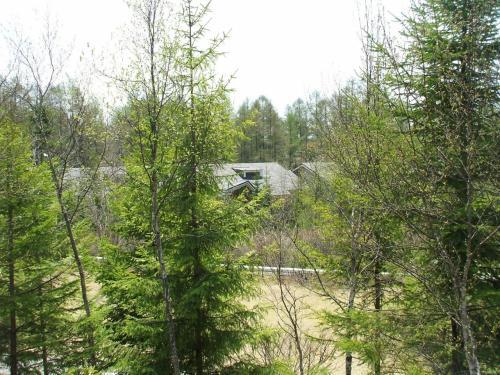私の部屋1212号室のバルコニーからの眺め(写真)。カラマツの芽吹きが美しい。蓼科にも遅い春が来た。
