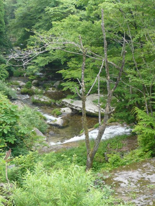こちらは「大滝」を上から見た風景です。<br /><br />Photo by wife