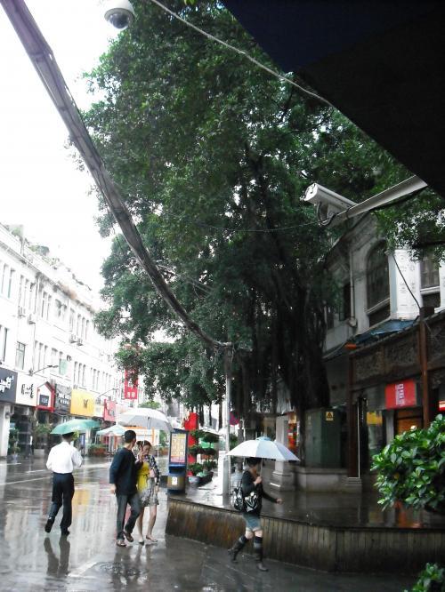 大きな木が、南国気分を高めてくれます。