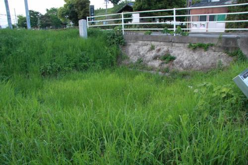 ここで、東門の木樋が見つかったらしいです。<br />草ぼうぼうで良くわかりません。
