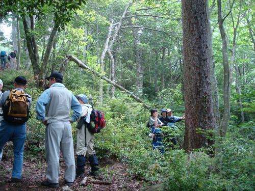 たまたま森林保護管理人に出会いました。<br />彼等は「樹齢200年以上の赤松の木が滑松(ナメラマツ)で、今現在12本(?だったかなぁ?)しかない。」「奈良東大寺再建の時ここから切り出して持って行った。」とか「切り出したのは重源上人で、…」もっとよく聞いとけば「石風呂」に期待しなかったのに…!