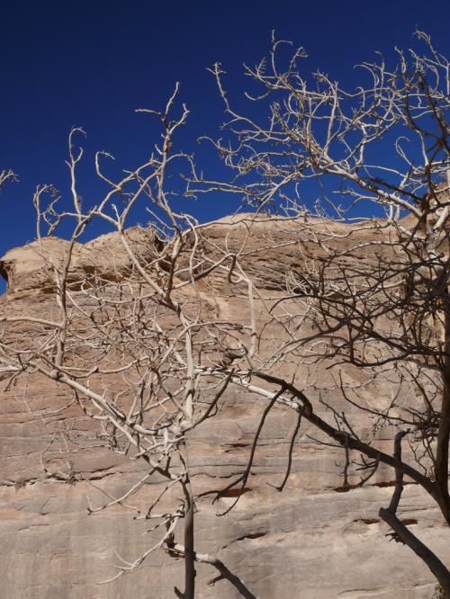 植物もまばらにあります。<br />青空と枝の白がきれいだった。