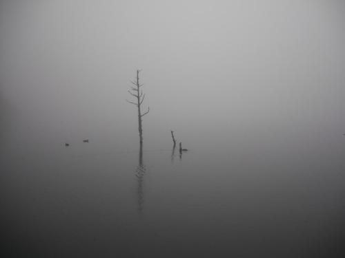 神秘的な雰囲気の女神湖が霧に包まれ幻想的になる。少なくなった枯れ木の周りにカモ(写真)が泳いでいる。