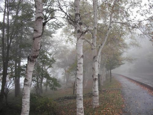 誰もいない遊歩道をゆっくりジョギングする。悪天候下で運動をすれば、それだけ温泉・食事がおいしくなる。