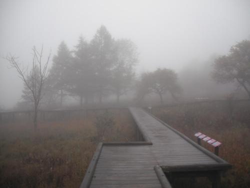 霧の中の遊歩道(写真)を黙々と走る。悪くはない。体は火照ってくるが外気は冷たいので天然のクーラーになる。
