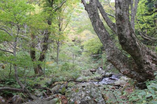 山道の左下は日野川の上流ということになるのでしょうか。